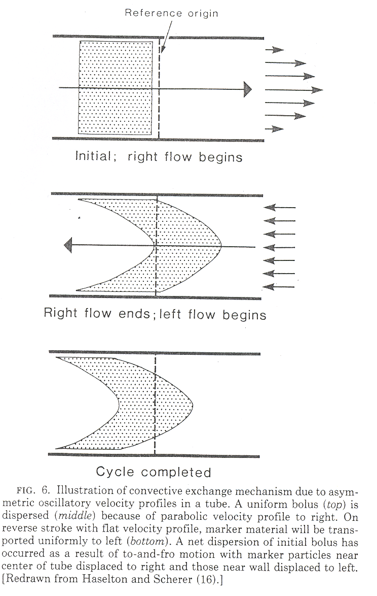Illustration of convective exchange mechanism